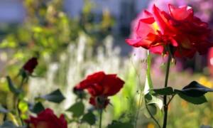 Живые цветы в Киеве. Где найти?