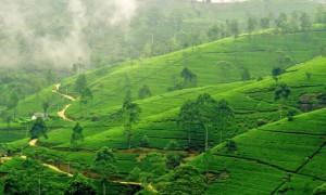 Шри-Ланка — это отличное место для отдыха