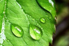 Как и когда удобрять растения?